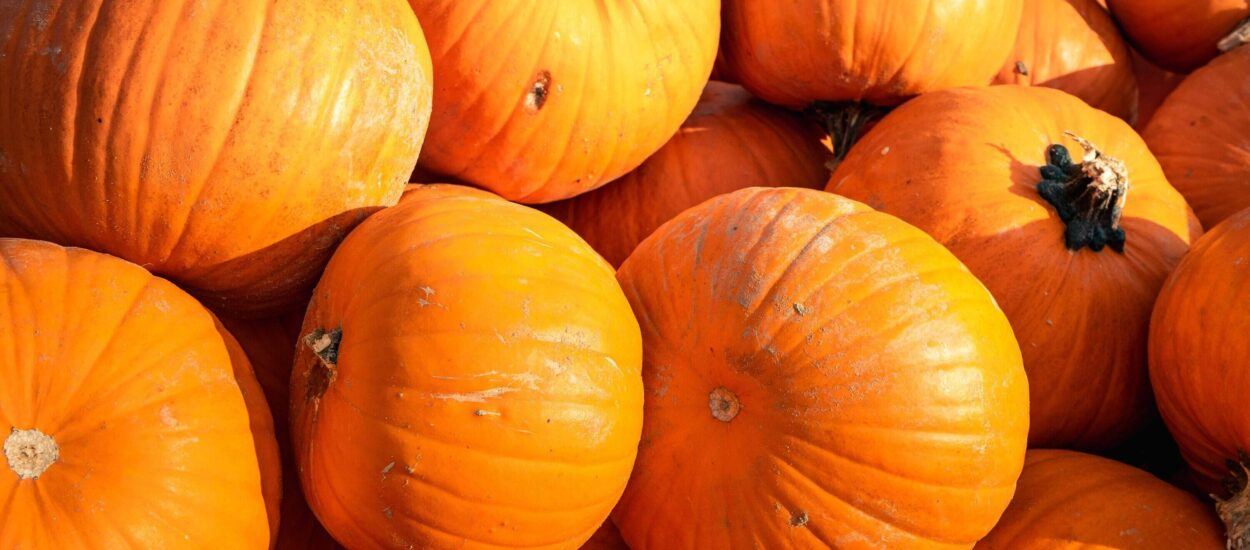 Everything you need to know about Pumpkins and its properties in your food!